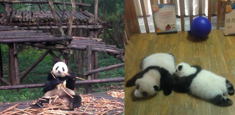 panda_base_visit
